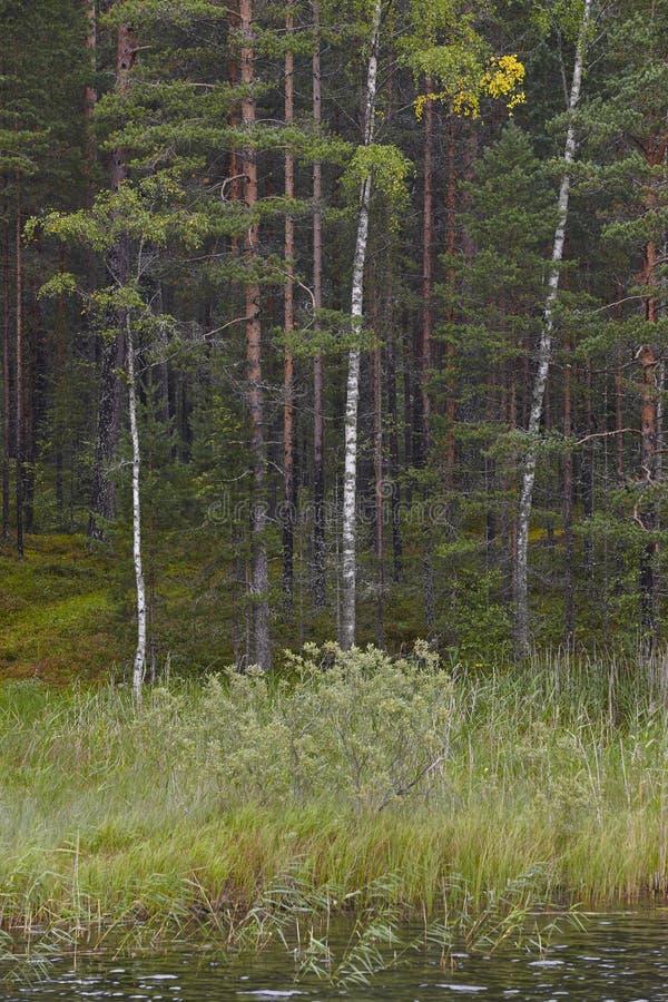 Финский ландшафт с лесом и озером Wildernes природы Финляндии стоковые фото