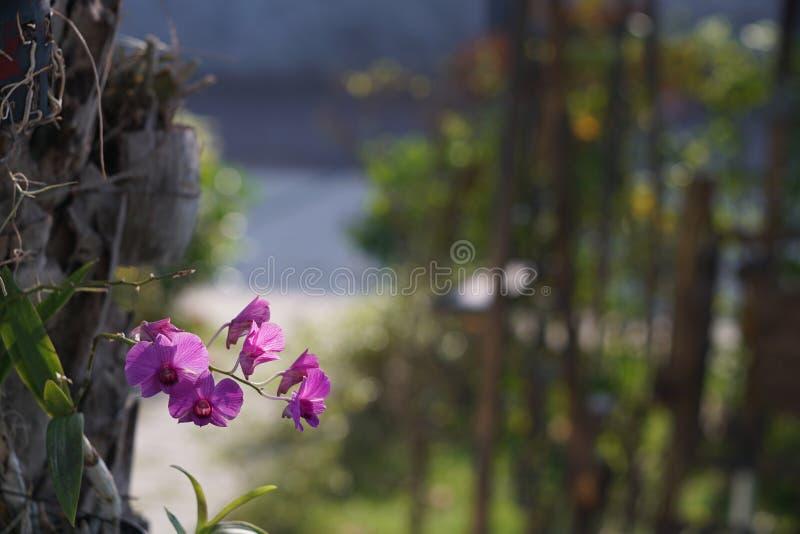 Красивая фиолетовая орхидея стоковые фото