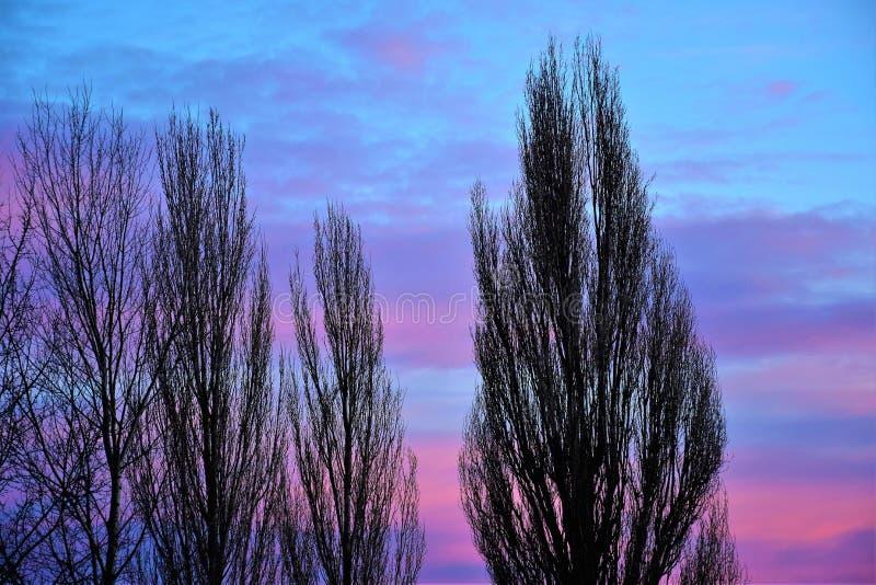 фиолетовое небо захода солнца стоковая фотография