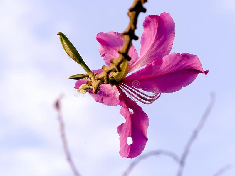 Фиолетовое обслуживание стоковое фото rf