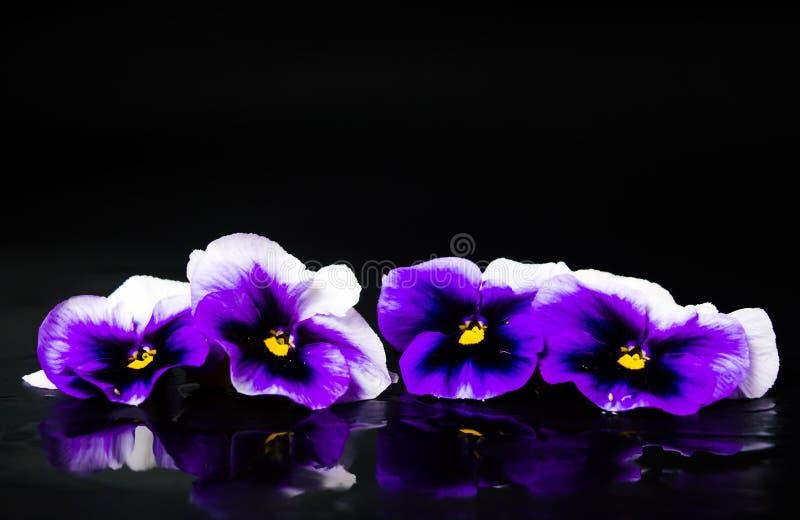 Фиолетовое расположение цветков на темной предпосылке стоковая фотография