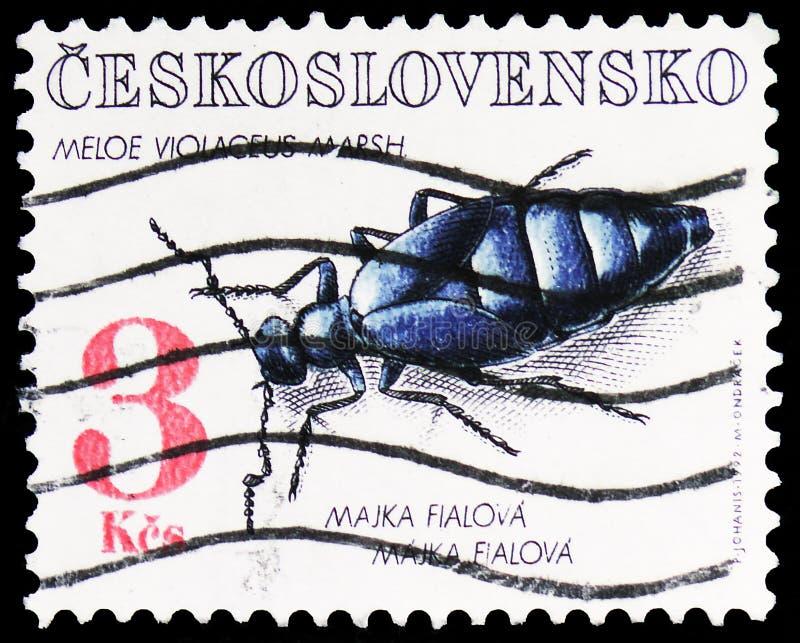 Фиолетовое violaceus Meloe жука масла, serie предохранения от природы, около 1992 стоковое фото rf