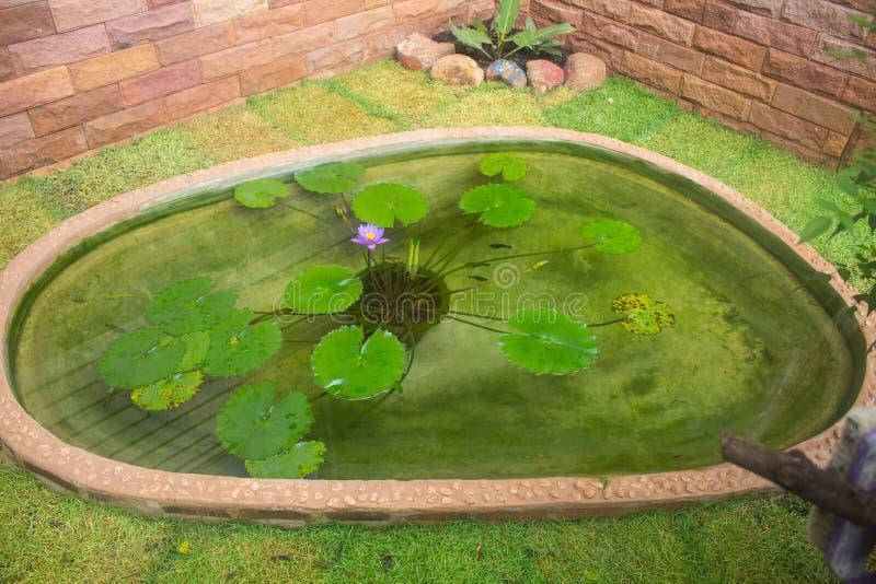 Фиолетовые лотос и листья в пруде стоковые изображения