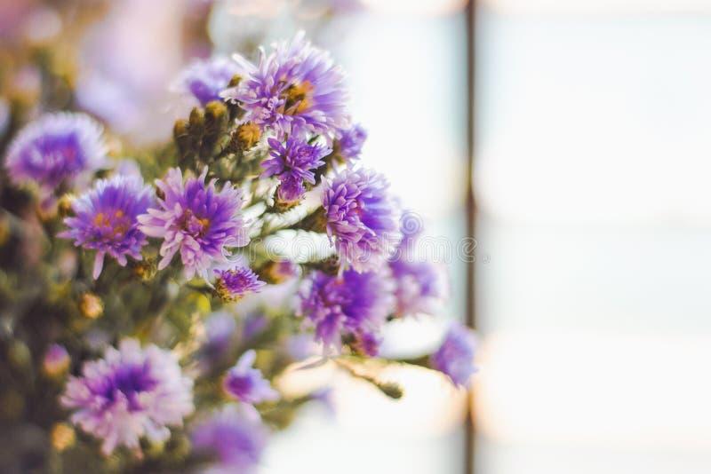 Фиолетовые цветки около окна дома стоковая фотография