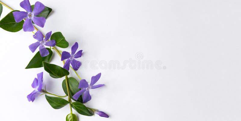 Фиолетовые цветки сирени на белой ткани стоковое изображение rf
