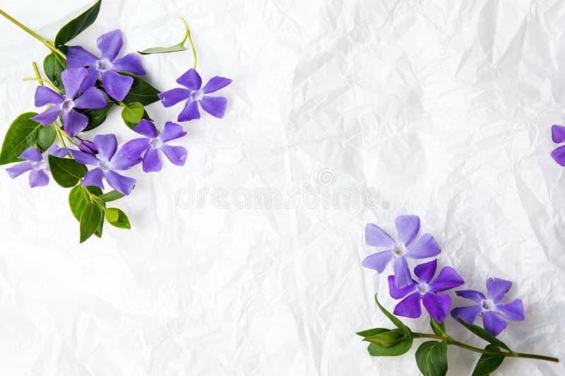 Фиолетовые цветки сирени на белой ткани стоковые изображения