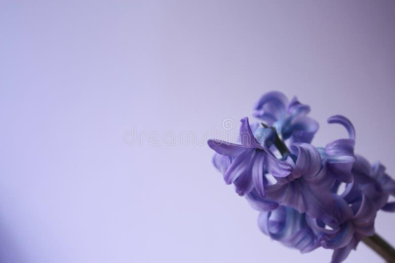 фиолет цветка стоковая фотография
