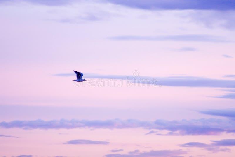 фиолет чайки стоковое фото