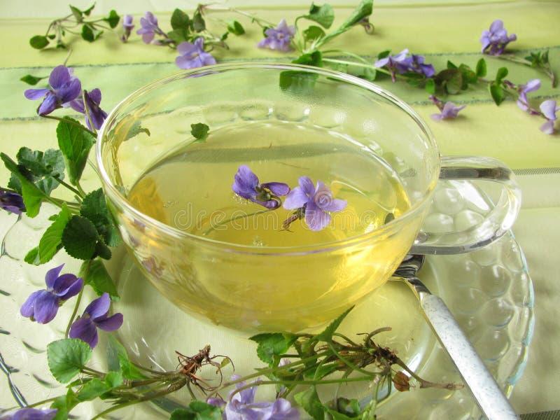 фиолет чая стоковая фотография