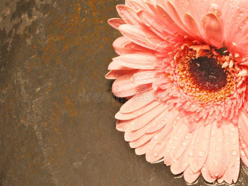 Download фиоритура падения стоковое фото. изображение насчитывающей пинк - 477366