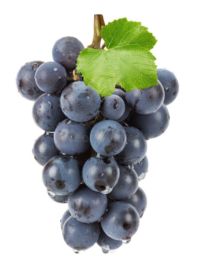 Фиолетовая виноградина изолированная на белой предпосылке стоковая фотография