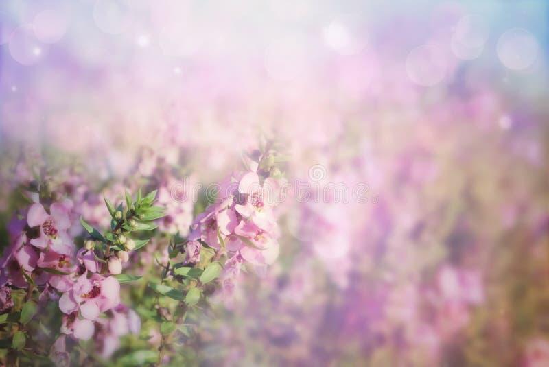 Фиолетовая предпосылка луга цветка весны стоковое фото