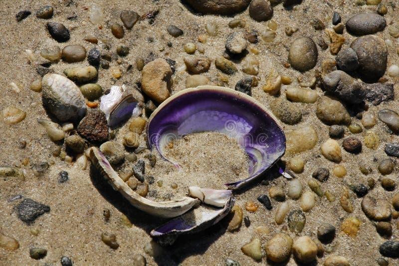Фиолетовая раковина между утесами стоковые изображения