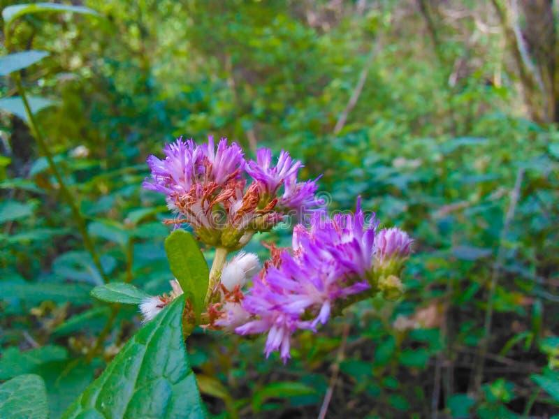 Фиолетовая фотография цветка стоковое изображение rf