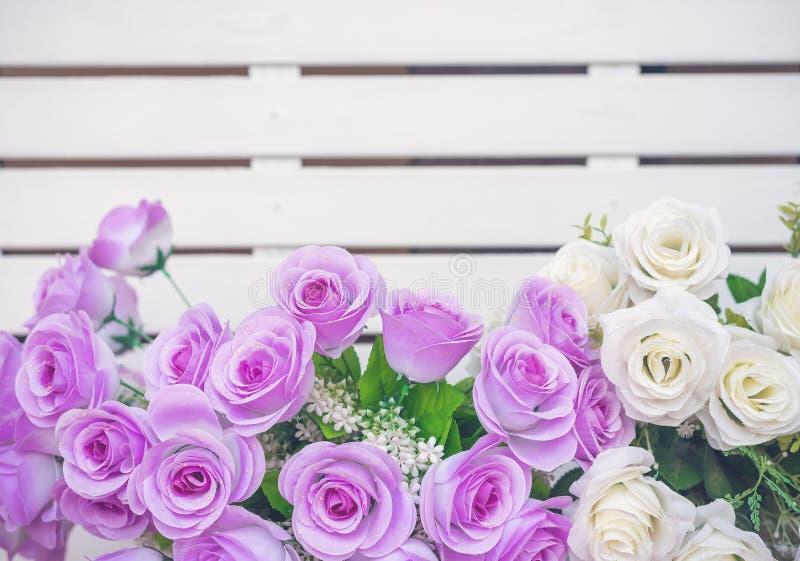 Фиолетовое и белое roese стоковые фотографии rf