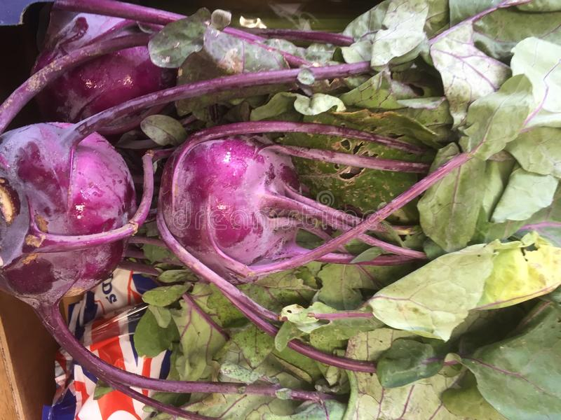 Фиолетовое Khol Rabi стоковая фотография