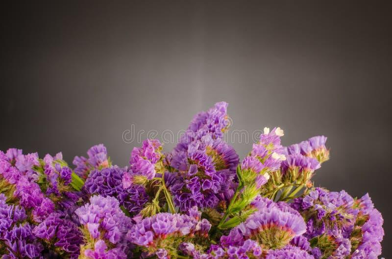 Фиолетовое statice стоковые изображения