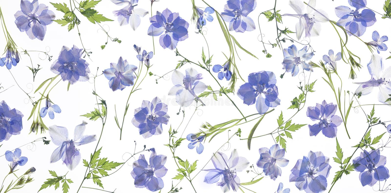 Фиолетовые лепестки и листья цветка стоковые фотографии rf
