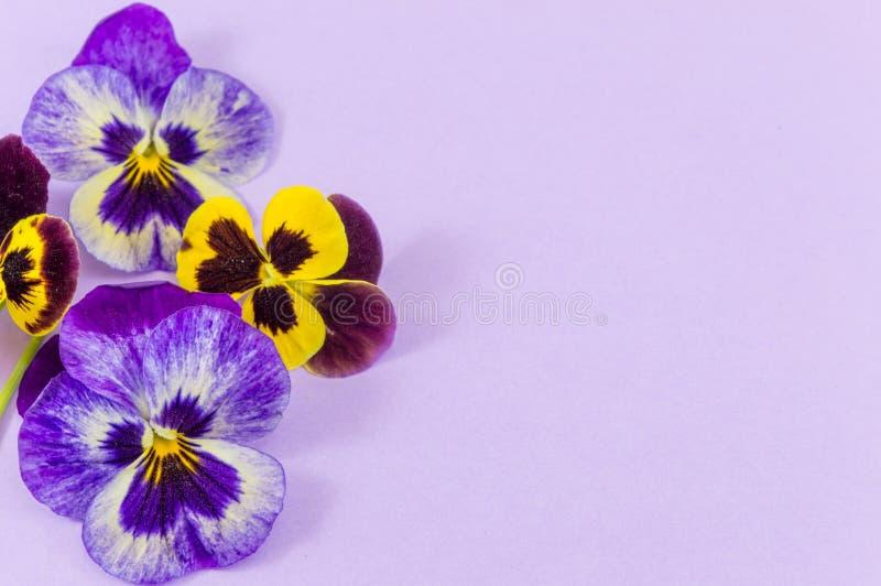 Фиолетовые и желтые цветки стоковое изображение rf