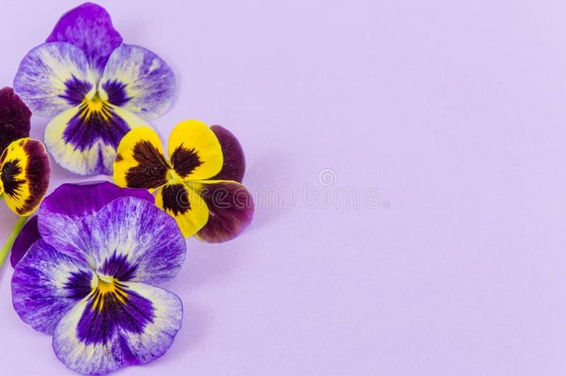 Фиолетовые и желтые цветки стоковые изображения rf