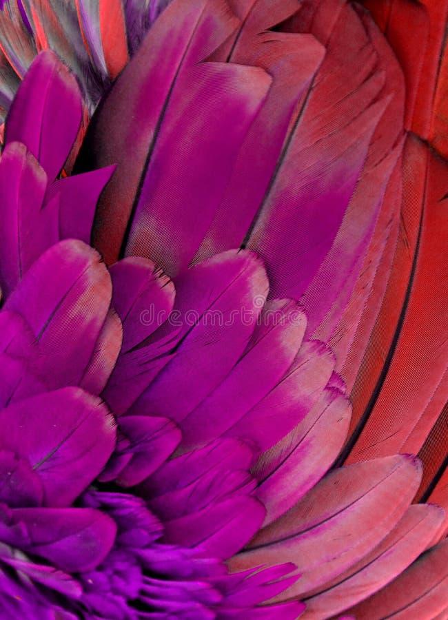 Download Фиолетовые и розовые пер стоковое фото. изображение насчитывающей пер - 81802714