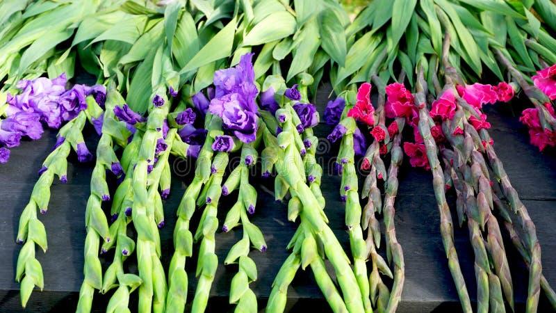Фиолетовые и розовые цветки и зеленый хобот стоковое изображение rf