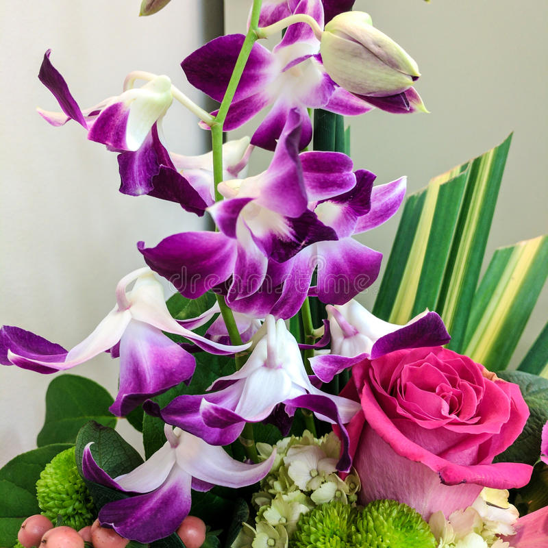 Фиолетовые орхидеи и розовое подняли стоковое фото