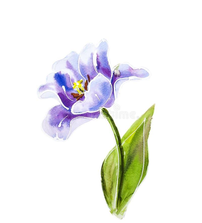 Фиолетовые тюльпаны, картина акварели иллюстрация вектора
