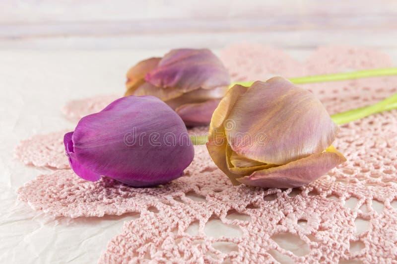 Фиолетовые тюльпаны на розовой ткани стоковое фото rf