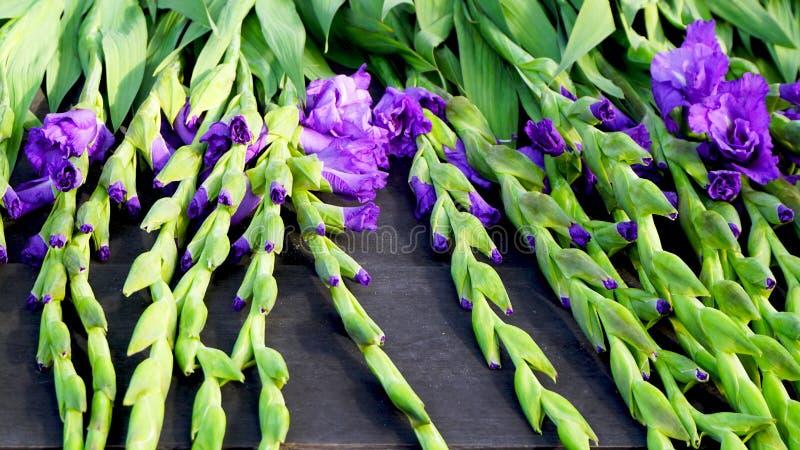 Фиолетовые цветки и зеленый хобот стоковые изображения