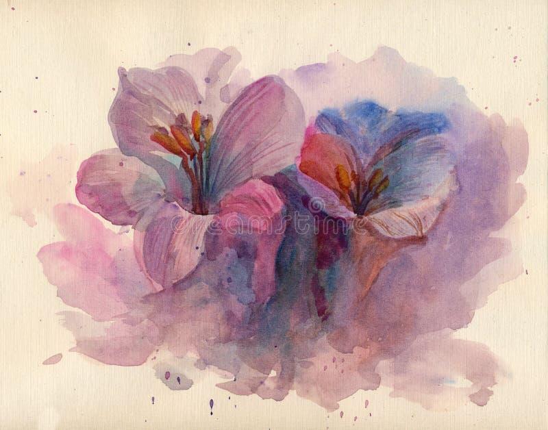 Фиолетовые цветки крокусов иллюстрация вектора