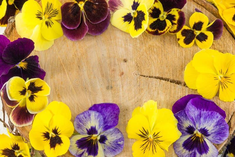 Фиолетовые цветки на деревянном журнале стоковые изображения rf