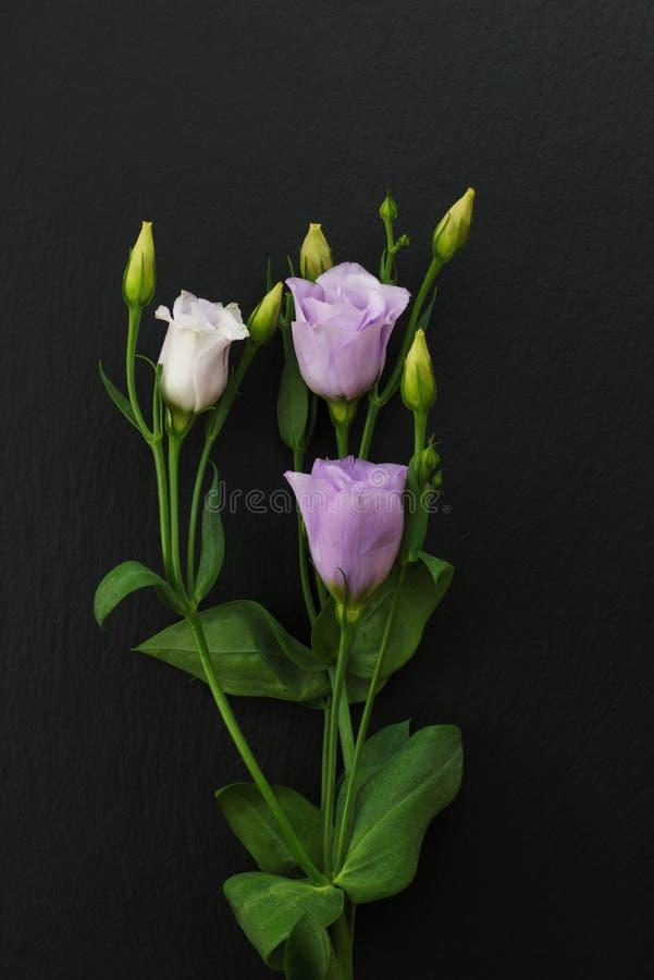 Фиолетовые цветки Eustoma на черной каменной предпосылке стоковые изображения rf