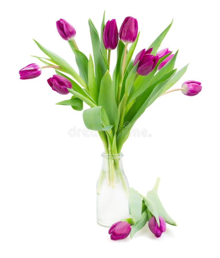 Фиолетовый букет тюльпанов стоковые фотографии rf