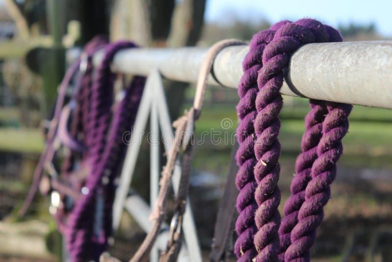 Фиолетовый тэкс лошади на загородке стоковые фотографии rf