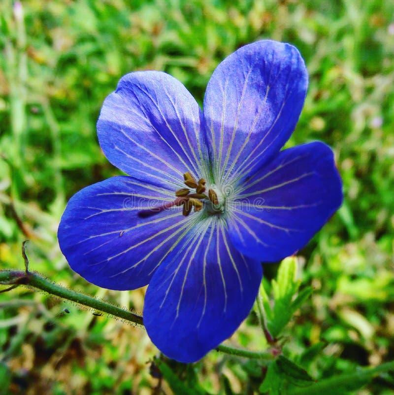 Фиолетовый цветок в солнечности стоковая фотография