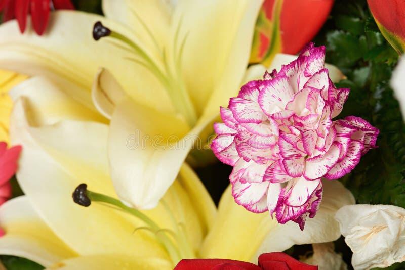 Фиолетовый цветок гвоздики стоковые изображения rf
