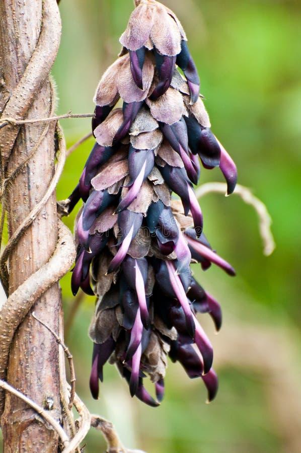 Download Фиолетовый цветок с зеленой предпосылкой Стоковое Изображение - изображение насчитывающей кровопролитное, цвет: 40579265