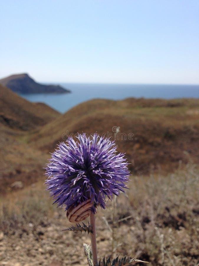Фиолетовый цветок с улиткой стоковое фото