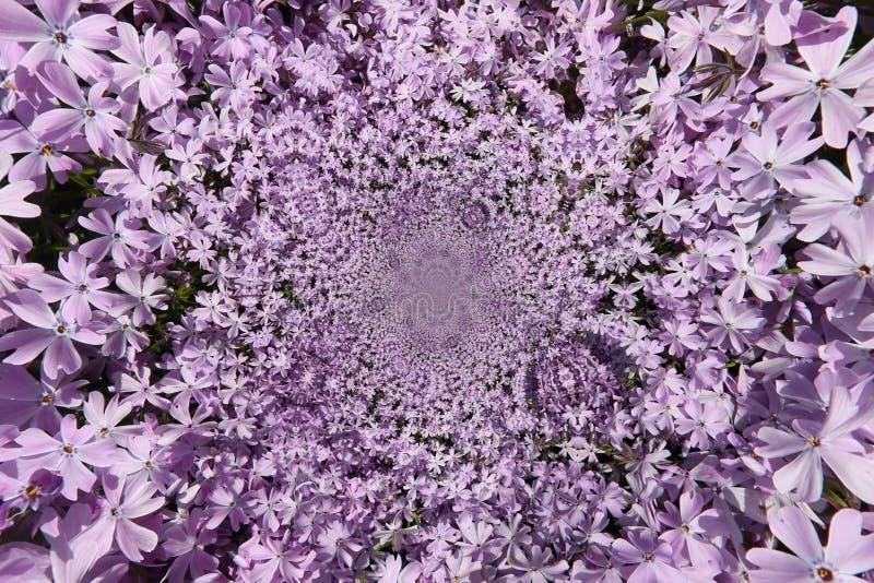 Фиолетовый цветок Funnell стоковое изображение rf