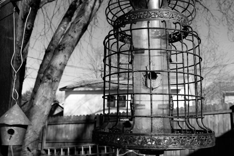 Фидер клетки птицы стоковая фотография