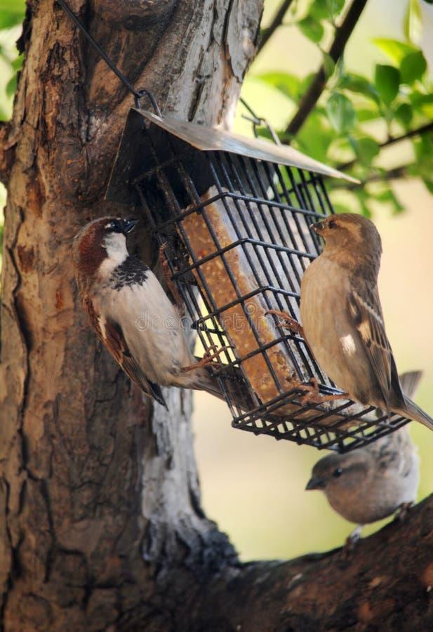 Фидер птицы стоковое фото