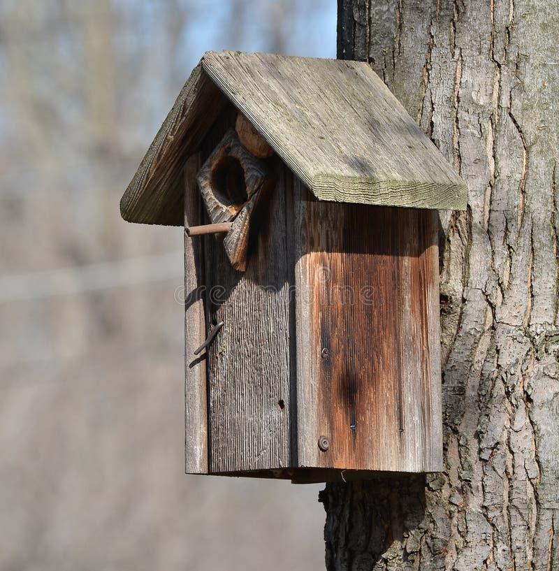 Фидер птицы стоковое фото rf