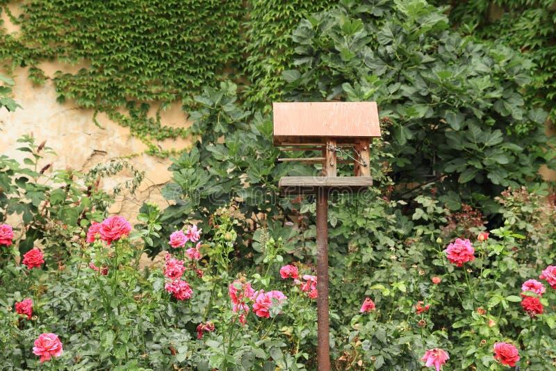 Фидер птицы стоковые фотографии rf