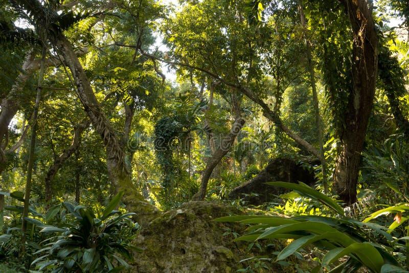 Фиджийские тропические джунгли стоковые фото