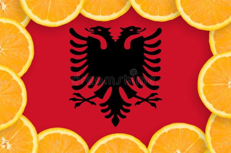 Флаг Албании в свежей рамке кусков цитрусовых фруктов бесплатная иллюстрация