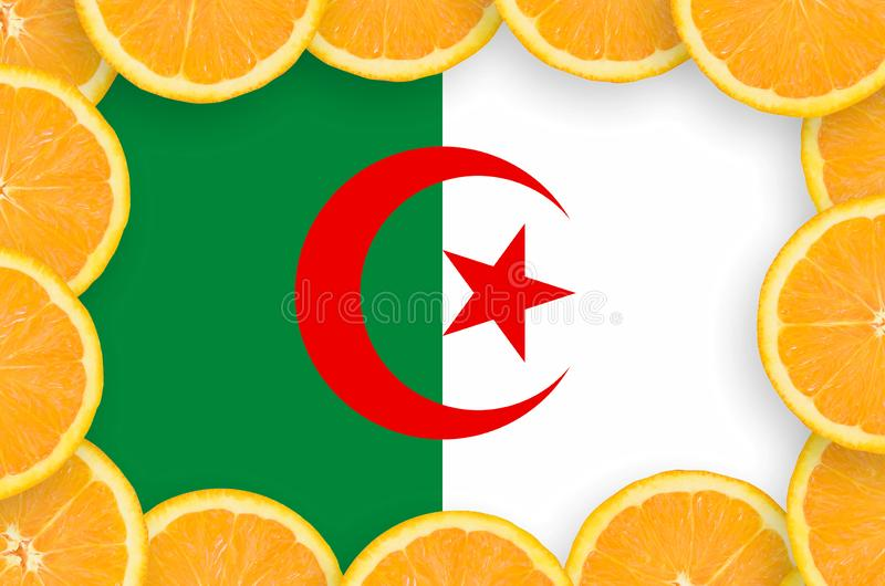 Флаг Алжира в свежей рамке кусков цитрусовых фруктов иллюстрация вектора