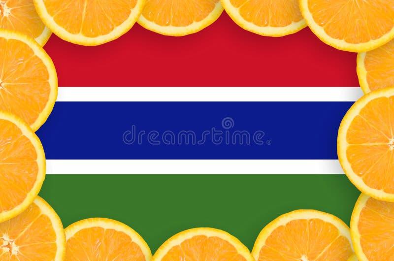 Флаг Гамбии в свежей рамке кусков цитрусовых фруктов иллюстрация вектора