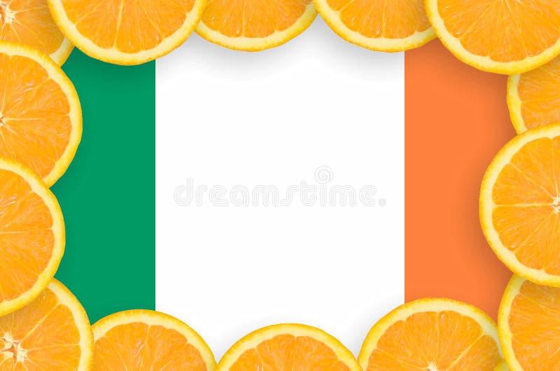 Флаг Ирландии в свежей рамке кусков цитрусовых фруктов иллюстрация вектора