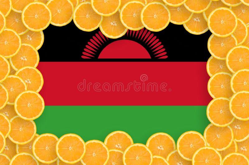 Флаг Малави в свежей рамке кусков цитрусовых фруктов иллюстрация штока